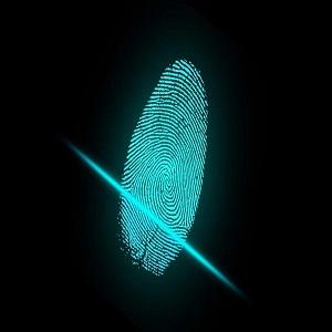 forensic auditor sydney